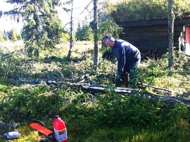 Skogpleie ved velkoia - Foto: Erik Helli